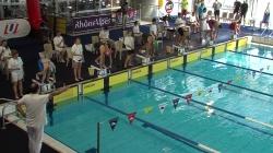 Le calendrier des compétitions de natation